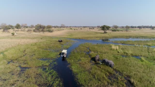 Aerial view of a tourist boat looking at elephants feeding on river bank one of the many curving waterways of the Okavango Delta Aerial view of a tourist boat looking at elephants feeding on river bank one of the many curving waterways of the Okavango Delta botswana stock videos & royalty-free footage