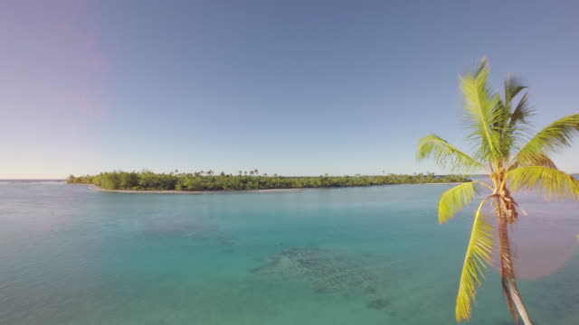 Aerial view of a tropical island with palm tree in foreground - Tetiaroa, Tahiti, French Polynesia video