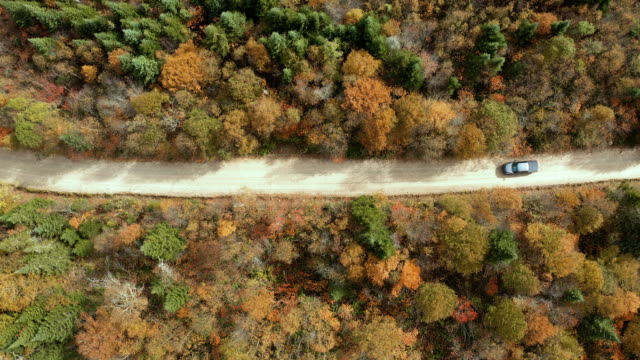 vídeos de stock e filmes b-roll de aerial view of a vehicle on road leading trough beautiful colorful autumn forest in sunny fall - reto descrição física