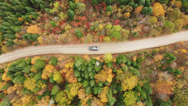 Aerial View of a vehicle on road leading trough beautiful colorful autumn forest in sunny fall