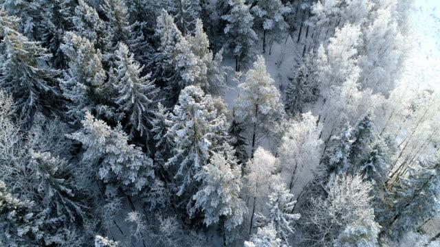 flygfoto över en vinter skog med frostiga träd - pine forest sweden bildbanksvideor och videomaterial från bakom kulisserna