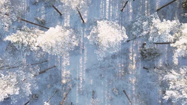 vídeos de stock, filmes e b-roll de vista aérea de uma floresta de pinheiros coberta de neve de inverno. textura da floresta de inverno. paisagem congelada de inverno. floresta coberta de neve. ver de cima - multicóptero