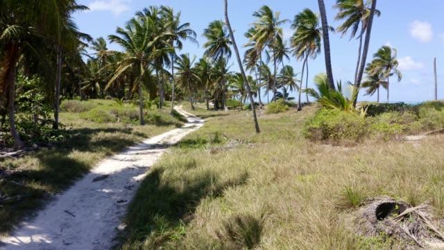 Luftaufnahme eines wunderschönen einsamen tropischen exotischen Strandes mit Palmen, Punta Cana, Dominikanische Republik – Video