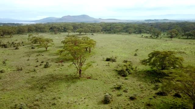 vídeos de stock e filmes b-roll de aerial view of african savannah in kenya - quénia