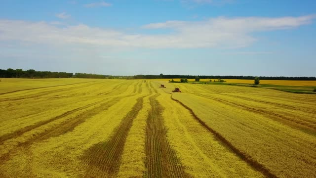 aerial view of agricultural machinery on the wheat field - agricultural machinery stock videos & royalty-free footage