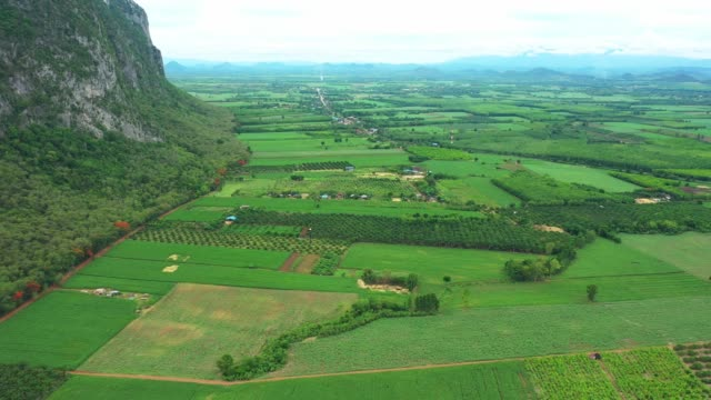 Aerial view of agriculture and the mountainous landscape and corn fields that are abundant in the countryside during the cultivation season. Sa Kaeo, Thailand video
