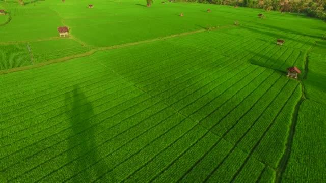 luftaufnahme der landwirtschaft in reisfeldern - strohhut stock-videos und b-roll-filmmaterial