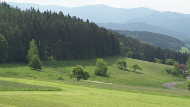 Aerial view of alpine forest and pasture German couple enjoys views and beer from a hot air balloon pasture stock videos & royalty-free footage