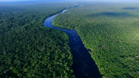 luftaufnahme des amazonas-regenwaldes in brasilien - fluss stock-videos und b-roll-filmmaterial