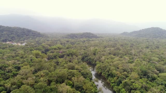 aerial view of amazon rainforest, south america - myanmar video stock e b–roll