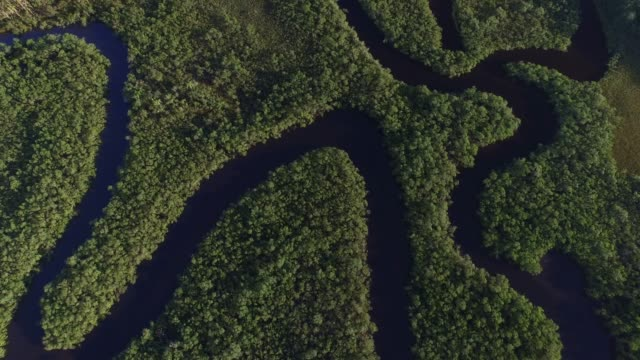 Aerial View of Amazon Rainforest, South America Aerial View of Amazon Rainforest, South America amazon stock videos & royalty-free footage