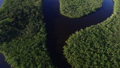luftaufnahme der amazonas-regenwald, südamerika - fluss stock-videos und b-roll-filmmaterial