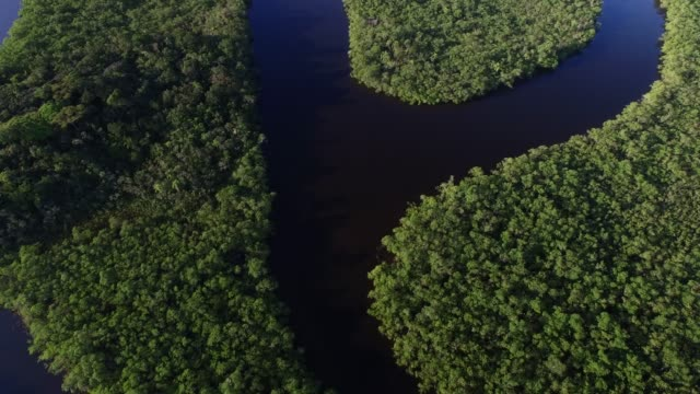 aerial view of amazon rainforest, south america - колумбия стоковые видео и кадры b-roll
