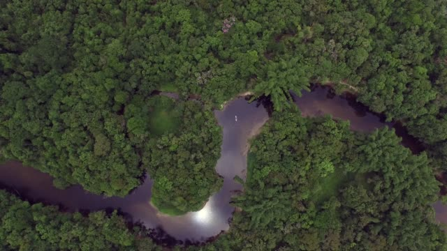 Aerial View of Amazon Rainforest, South America video