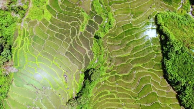aerial view of an amazing landscape with drone above rice terraces. - taras ryżowy filmów i materiałów b-roll