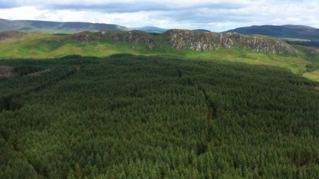Aerial view of an area of forest in rural south west Scotland Aerial view of an area of forest, in rural Dumfries and Galloway. The 4K video was captured using a drone in a remote location on a bright summer morning. galloway scotland stock videos & royalty-free footage