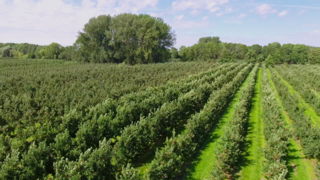 Aerial view of apple plantation in Altes Land near Hamburg, Germany video