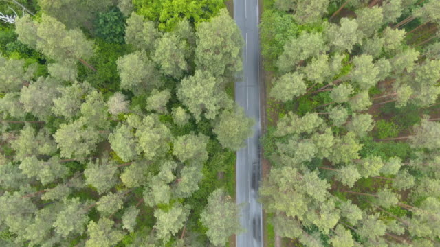 Aerial view of asphalt road with green forest on both sides. Drone moves along highway in rural area. Top view of wet way on rainy day outdoors.