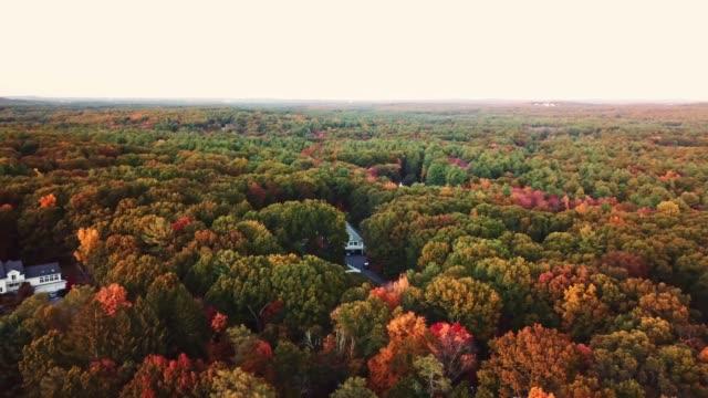 vídeos y material grabado en eventos de stock de vista aérea del árbol otoñal al atardecer en nueva inglaterra - drone footage