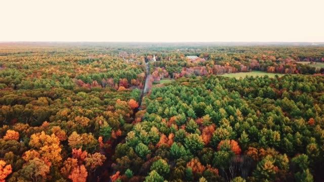 aerial view of autumnal tree at dusk in new england