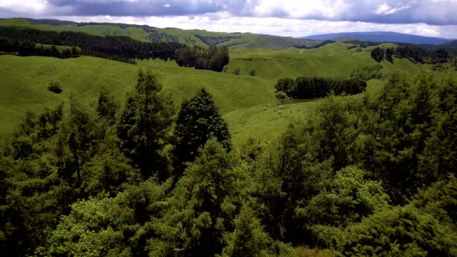 Bидео Aerial view of beautiful sheep farm with rolling hills in Rotorua, New Zealand