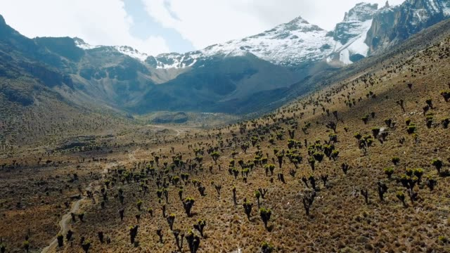 vídeos de stock e filmes b-roll de aerial view of beautiful succulent forest in mountains in kenya. drone footage of mount kenya national park - quénia