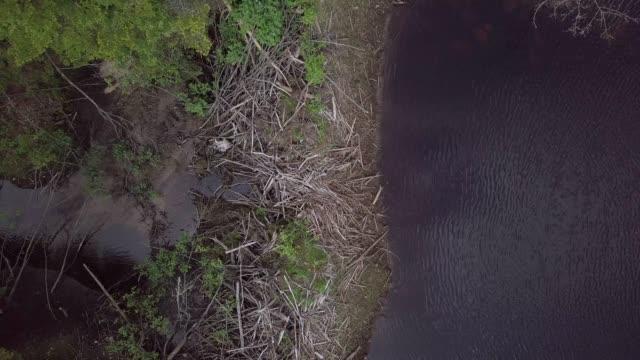 Luftbild von Beaver Dam in borealen Natur Wald und Fluss im Sommer – Video