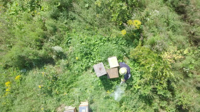 aerial view of beekeeper at work - ape regina video stock e b–roll
