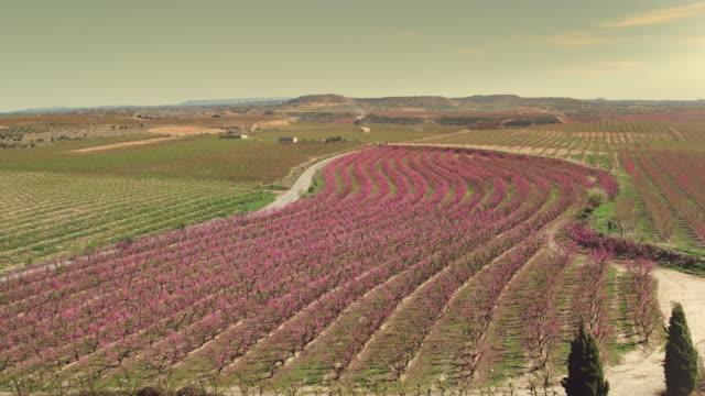stockvideo's en b-roll-footage met luchtfoto van de bomen van het fruit van de bloesem bij zonsondergang - floral line