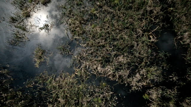 Aerial view of bog lands with white herons nesting place video