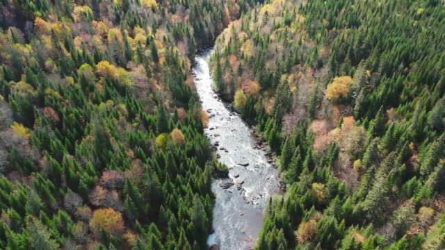 Video Aerial View of Boreal Forest Nature and River in Autumn Season