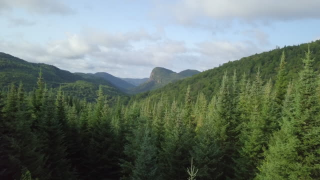 Video Aerial View of Boreal Nature Forest and Mountain in Summer