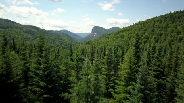 boreal doğa orman ve dağ yaz aylarında havadan görünümü - bakir yer stok videoları ve detay görüntü çekimi