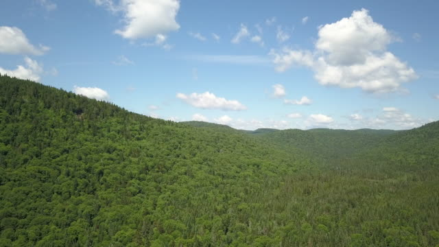 aerial view of boreal nature forest and mountain in summer - paesaggio collinare video stock e b–roll