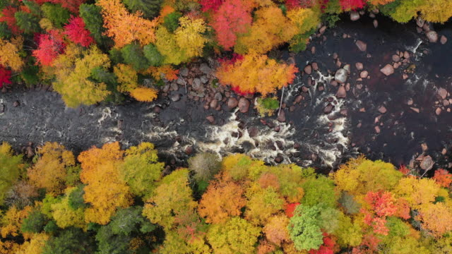 Video Aerial View of Boreal Nature Forest and River in Autumn, Quebec, Canada