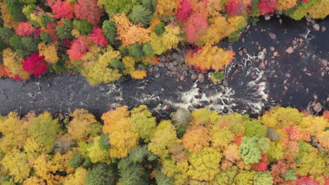 Aerial View of Boreal Nature Forest and River in Autumn, Quebec, Canada