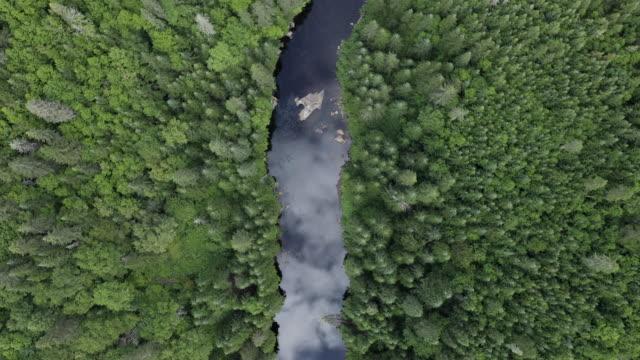 夏季自然森林和河流的鳥瞰圖 - 河 個影片檔及 b 捲影像