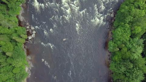 luftbild von boreal natur wald und fluss im sommer - fluss stock-videos und b-roll-filmmaterial