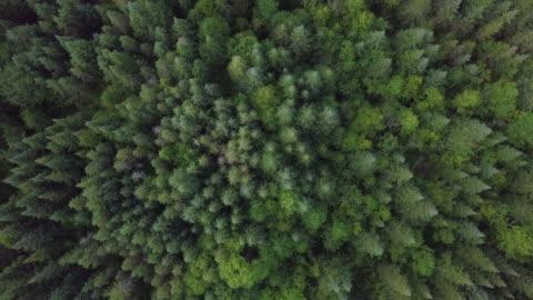 yaz aylarında boreal doğa orman havadan görünümü - dışarıda stok videoları ve detay görüntü çekimi