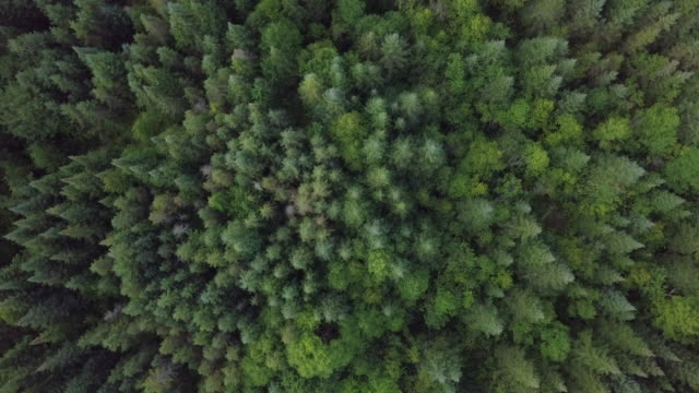 aerial view of boreal nature forest in summer - landscape video stock e b–roll