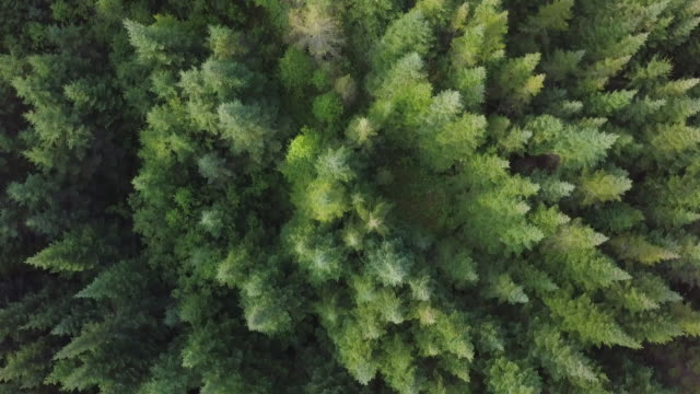 Aerial View of Boreal Nature Forest in Summer 4k UHD Video of an Aerial view of a boreal forest in Quebec, Canada in summer environmental conservation stock videos & royalty-free footage
