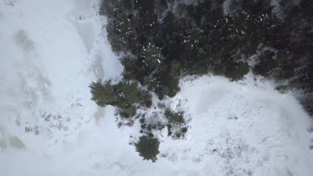 Aerial View of Boreal Nature Forest in Winter video