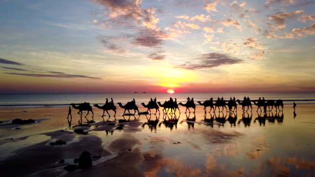 aerial view of camels on cable beach in broome australia - turysta filmów i materiałów b-roll