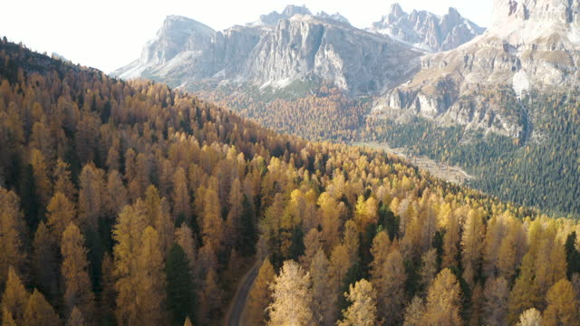 aerial view of car driving in a road through a larch tree forest  in the Dolomites video