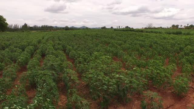 luftbild von cassava farm - finanzwirtschaft und industrie stock-videos und b-roll-filmmaterial