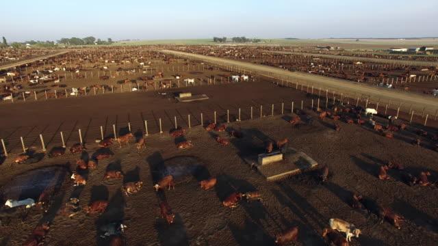 牛肥育場の空中写真 - 家畜点の映像素材/bロール