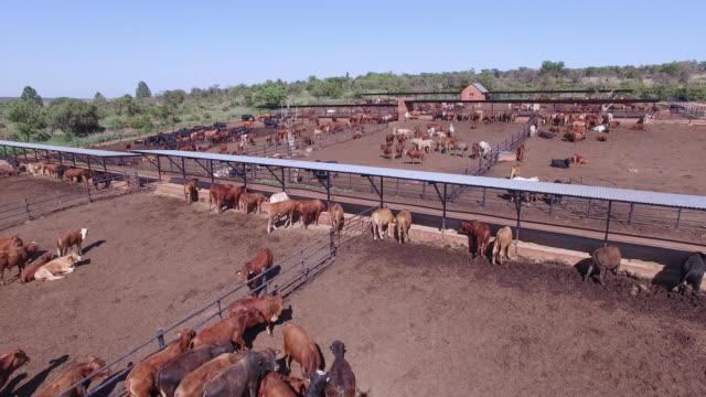 の航空写真牛の フィードロット - 家畜点の映像素材/bロール