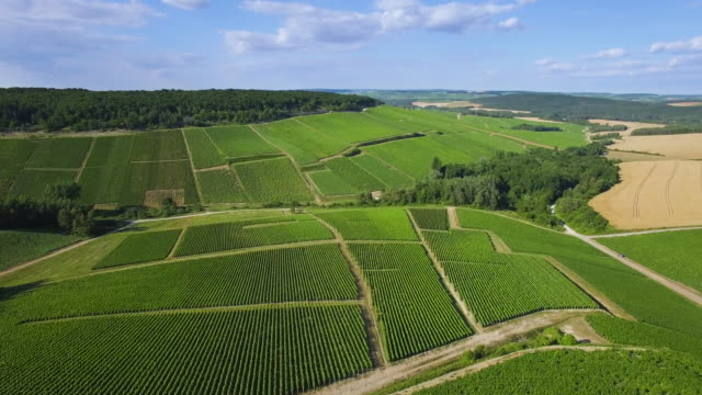 Aerial view of Champagne vineyards, Aube department, Les Riceys