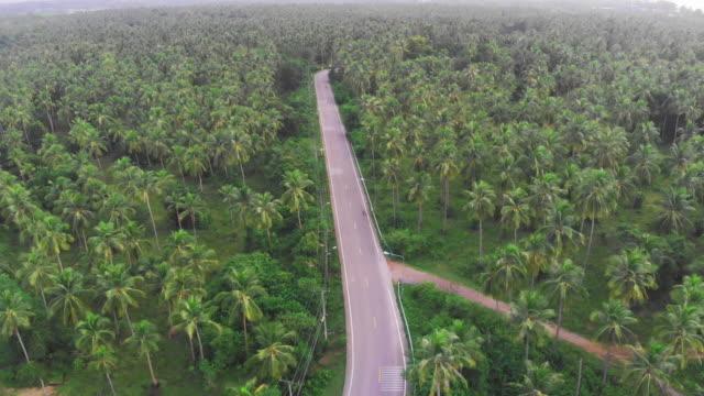 4k luftaufnahme der kokospalme baum feld. - tropischer baum stock-videos und b-roll-filmmaterial