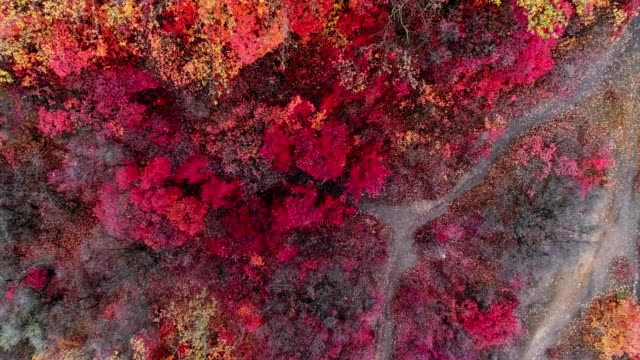 Aerial view of colorful autumn forest video